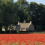 Enstone Poppies