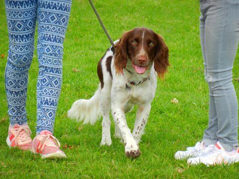 Enstone Parish Dog Show